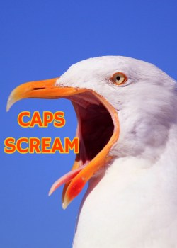 "sea gull with mouth wide open. The words ""CAPS SCREAM"" superimposed at it's mouth"
