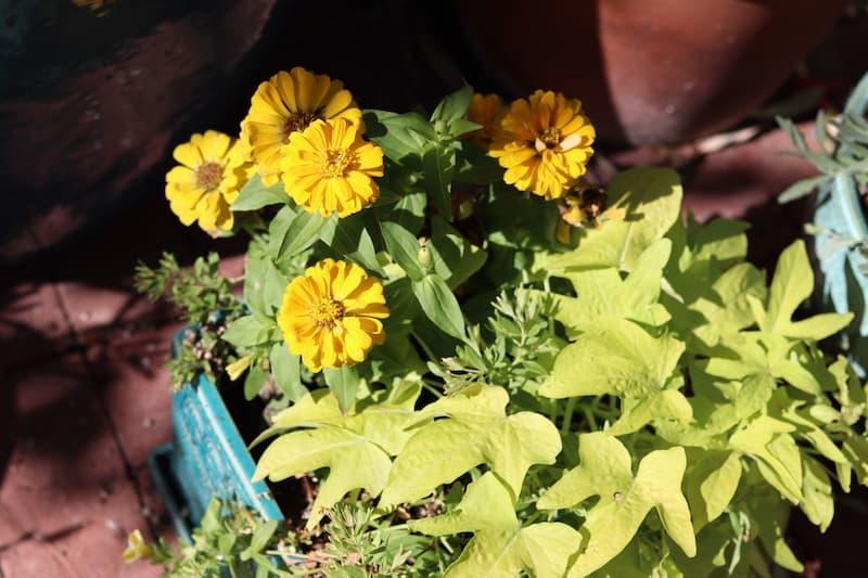 Phoenix townhome yellow flowers